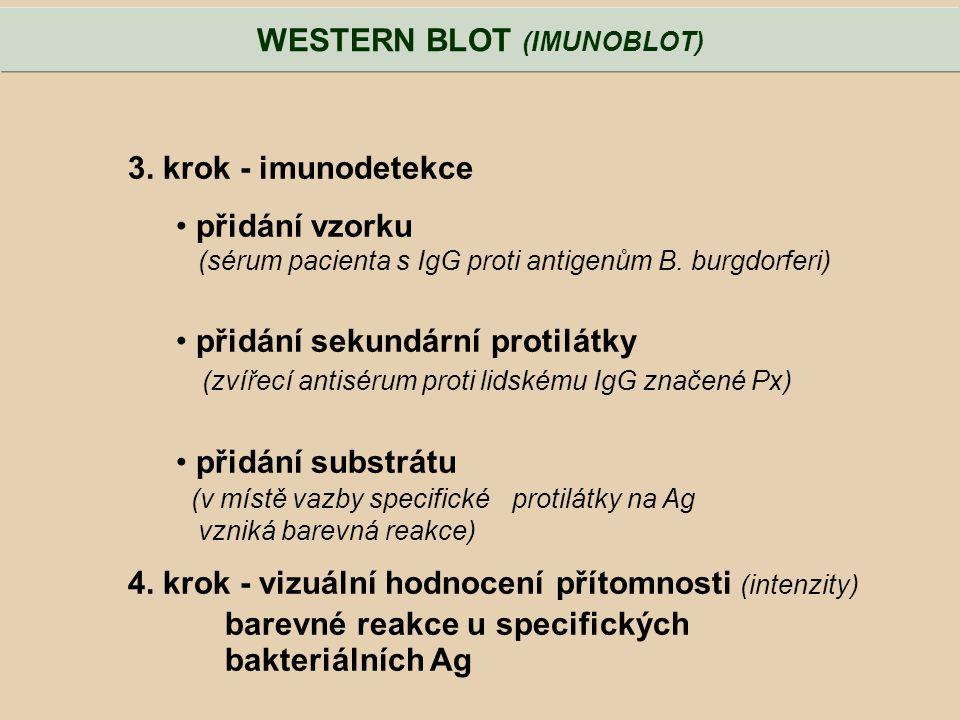 3. krok - imunodetekce přidání vzorku (sérum pacienta s IgG proti antigenům B. burgdorferi) přidání sekundární protilátky (zvířecí antisérum proti lid