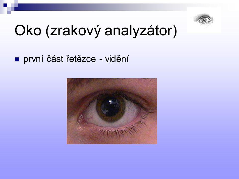 Oko (zrakový analyzátor) první část řetězce - vidění