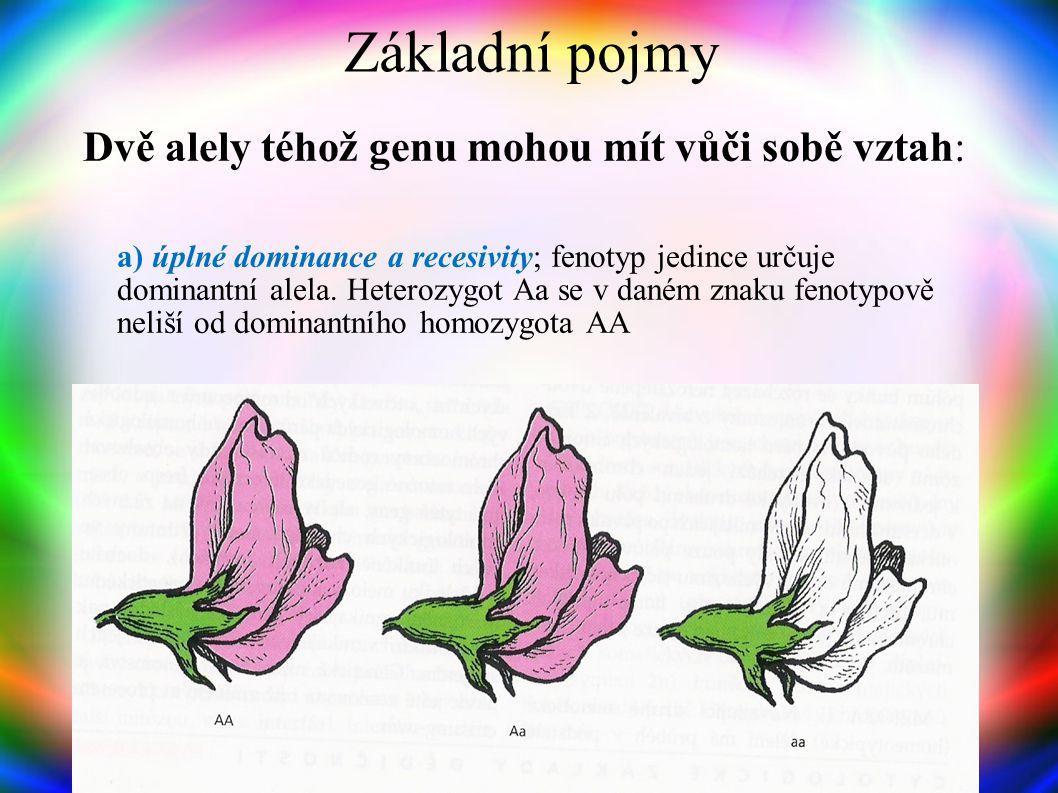Základní pojmy Alely Různé formy genu odpovědné za jeho odlišné projevy Shodné alely - homozygotní stav; dominantní homozygot (AA), recesivní homozygo