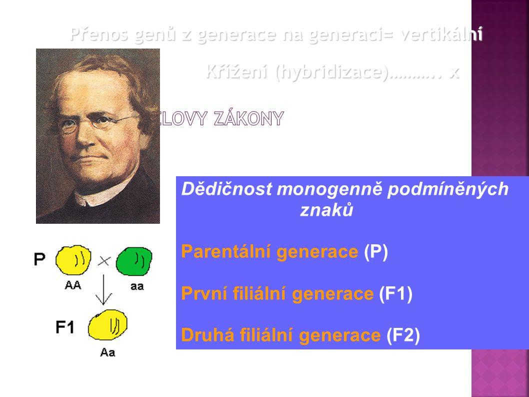 Dědičnost monogenně podmíněných znaků Parentální generace (P) První filiální generace (F1) Druhá filiální generace (F2) Přenos genů z generace na generaci= vertikální Křížení (hybridizace)………..