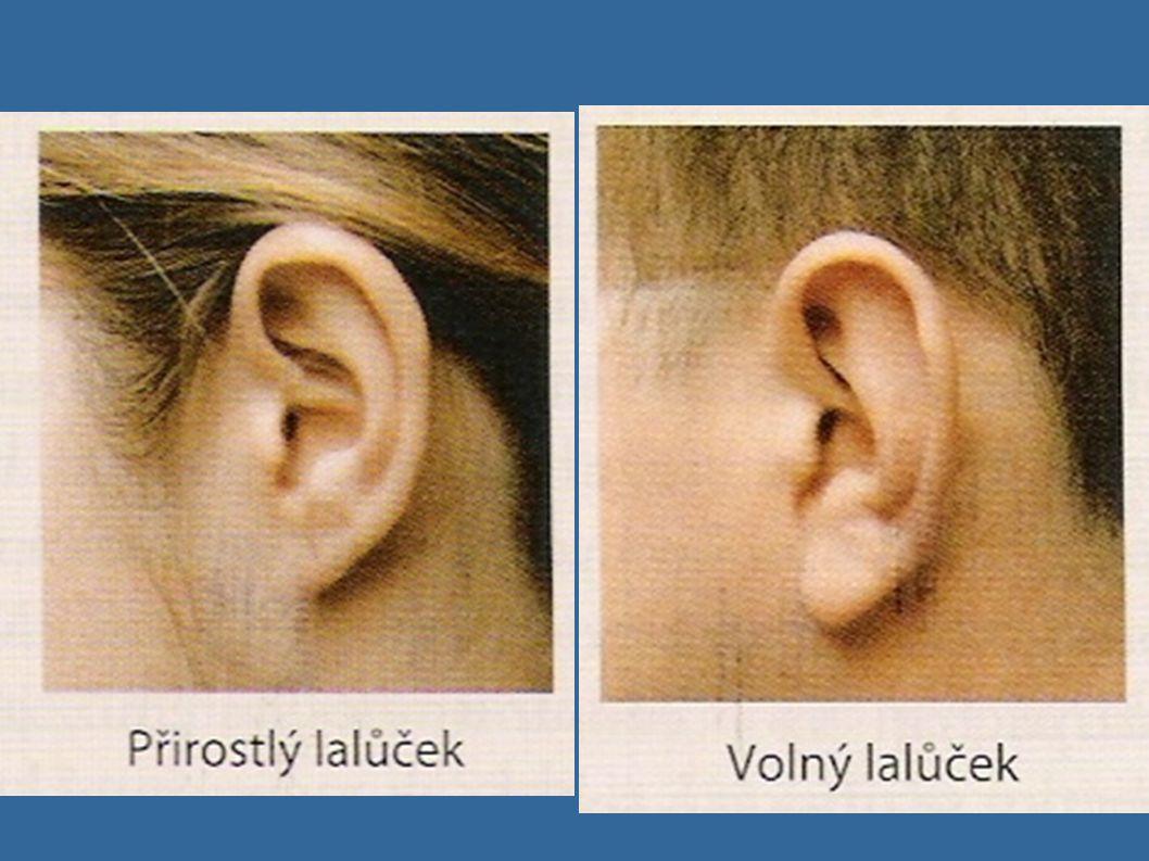  Dvě sestry mají rozdílné uši. Jedna má přirostlé ušní lalůčky (recesivní znak f) a druhá volné ušní lalůčky. Jejich rodiče mají volné lalůčky. Matka