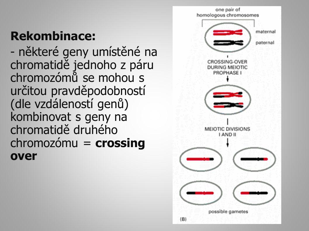 Rekombinace: - některé geny umístěné na chromatidě jednoho z páru chromozómů se mohou s určitou pravděpodobností (dle vzdáleností genů) kombinovat s geny na chromatidě druhého chromozómu = crossing over