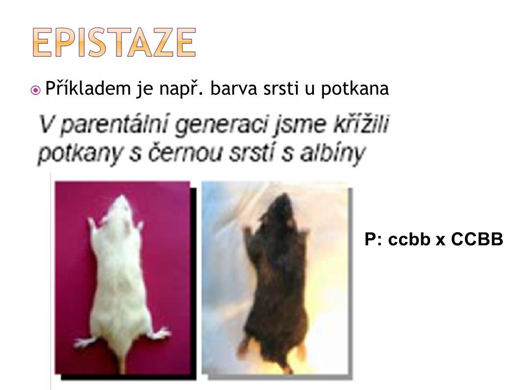  Příkladem je např. barva srsti u potkana P: ccbb x CCBB