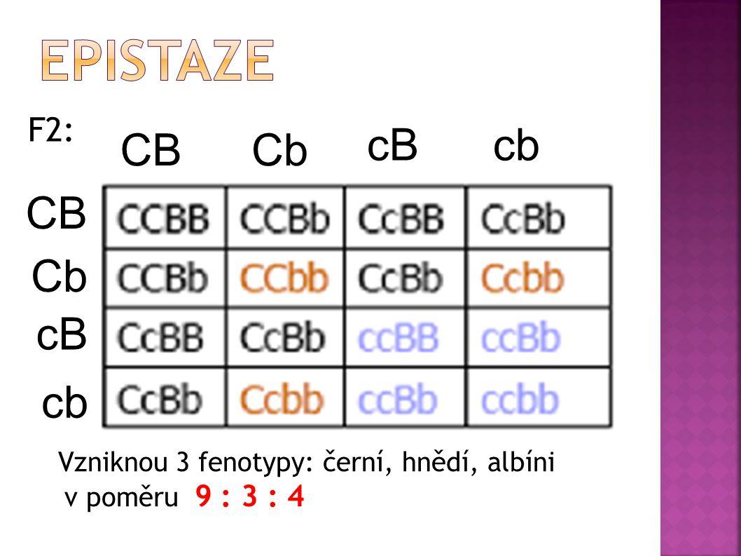  P: ccbb x CCBB albín černý  F1: CcBb černý Gamety: CB cB Cb cb