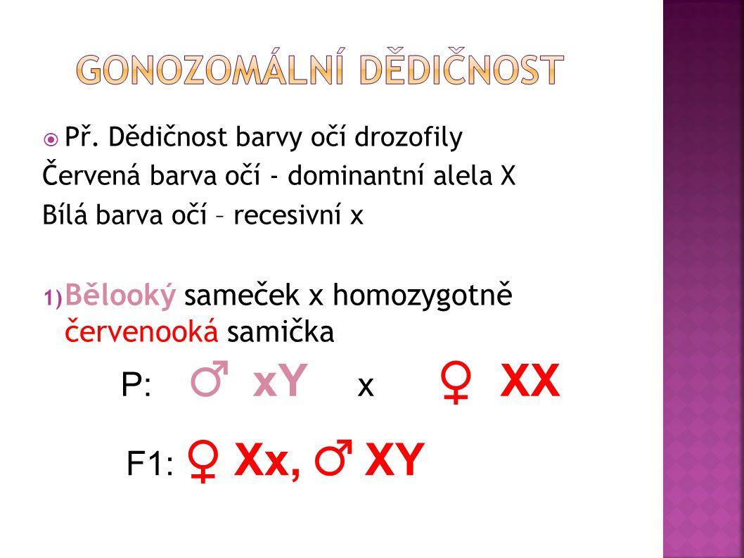  Vztahuje se ke genům lokalizovaným v heterologické části gonozomu X  Geny pohlavně vázané  Fenotypový projev závisí nejen na dominantní a recesivn