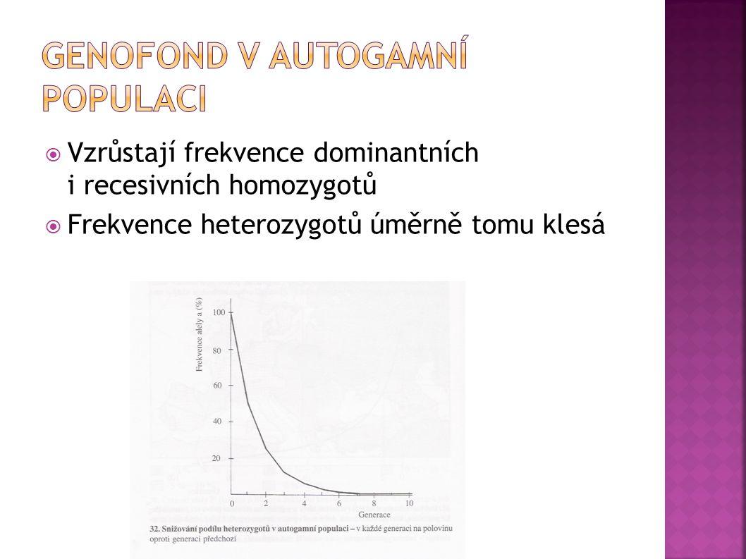  Vzrůstají frekvence dominantních i recesivních homozygotů  Frekvence heterozygotů úměrně tomu klesá