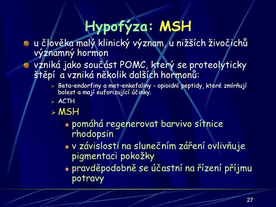27 Hypofýza: MSH u člověka malý klinický význam, u nižších živočichů významný hormon vzniká jako součást POMC, který se proteolyticky štěpí a vzniká několik dalších hormonů:  Beta–endorfiny a met–enkefaliny - opioidní peptidy, které zmírňují bolest a mají euforizující účinky.