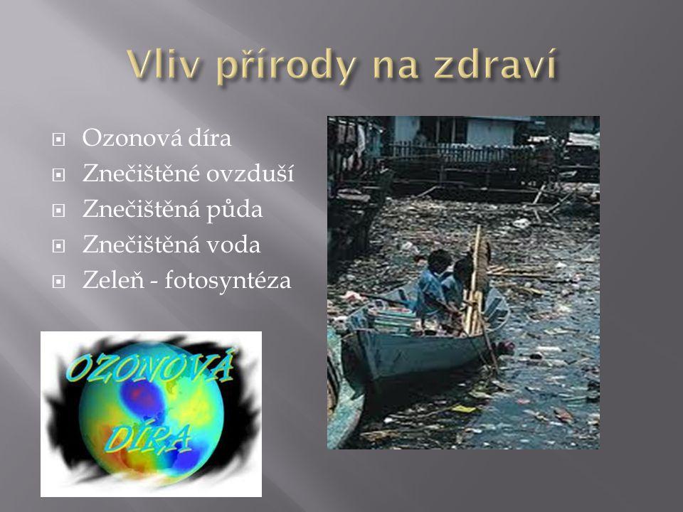  Ozonová díra  Znečištěné ovzduší  Znečištěná půda  Znečištěná voda  Zeleň - fotosyntéza