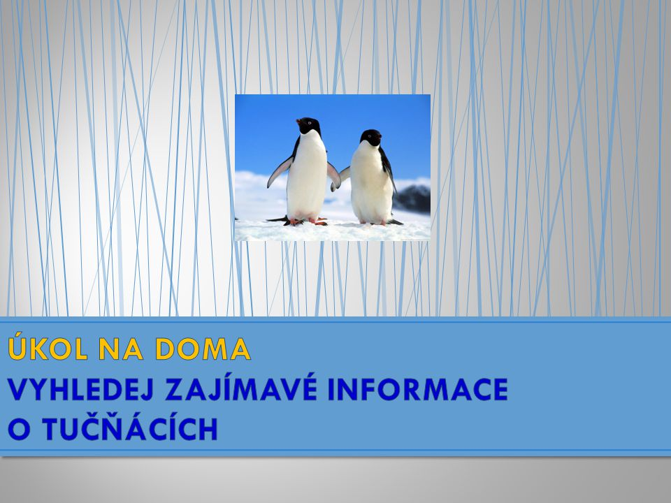 Tučňáci……………….