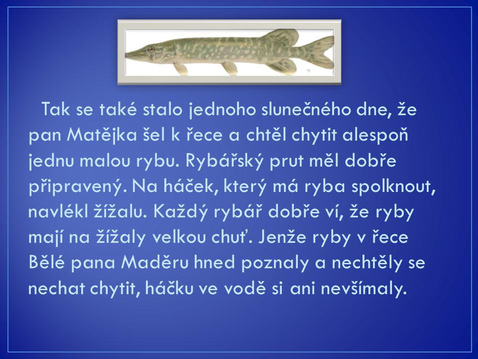 Tak se také stalo jednoho slunečného dne, že pan Matějka šel k řece a chtěl chytit alespoň jednu malou rybu. Rybářský prut měl dobře připravený. Na há