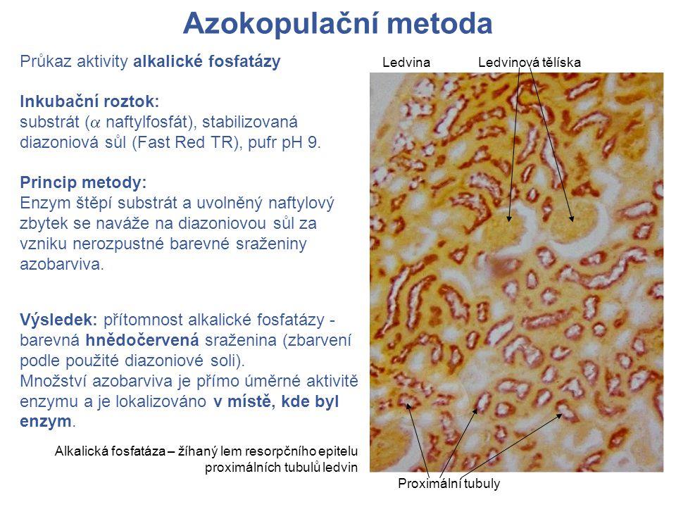 Azokopulační metoda Průkaz aktivity alkalické fosfatázy Inkubační roztok: substrát (  naftylfosfát), stabilizovaná diazoniová sůl (Fast Red TR), pufr pH 9.