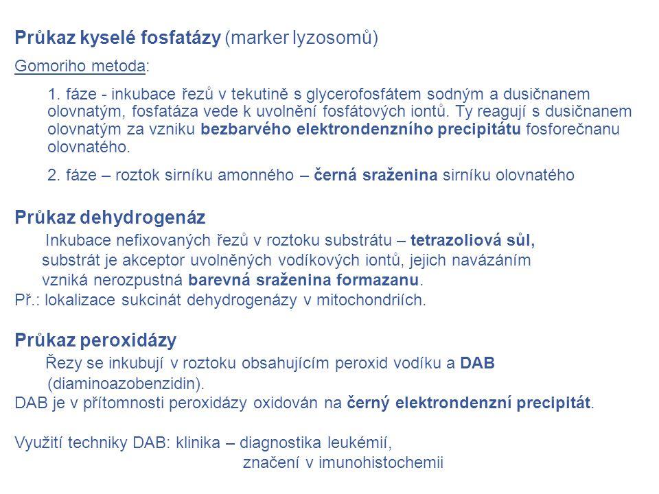 Průkaz kyselé fosfatázy (marker lyzosomů) Gomoriho metoda: 1.