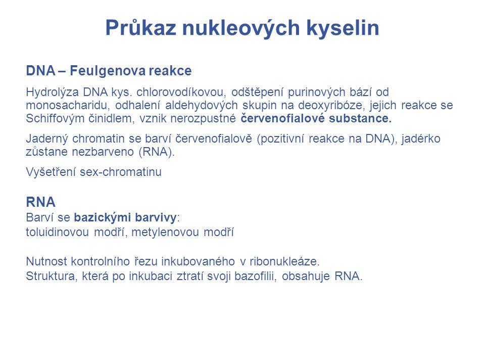 Průkaz nukleových kyselin DNA – Feulgenova reakce Hydrolýza DNA kys.