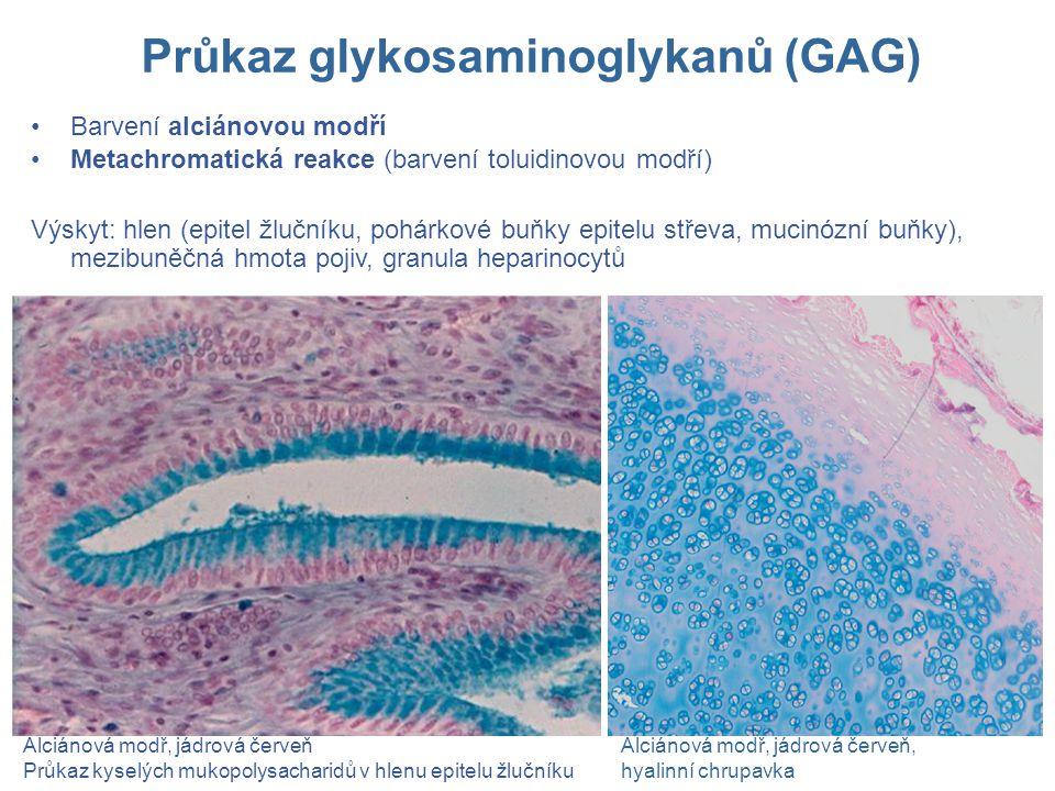 Barvení alciánovou modří Metachromatická reakce (barvení toluidinovou modří) Výskyt: hlen (epitel žlučníku, pohárkové buňky epitelu střeva, mucinózní buňky), mezibuněčná hmota pojiv, granula heparinocytů Alciánová modř, jádrová červeň Průkaz kyselých mukopolysacharidů v hlenu epitelu žlučníku Alciánová modř, jádrová červeň, hyalinní chrupavka Průkaz glykosaminoglykanů (GAG)