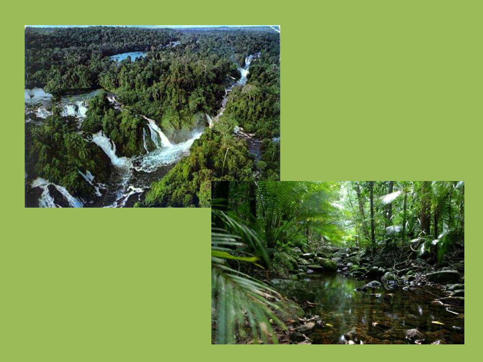 http://www.blueplanetbiomes.org/rainforest.ht m http://gardenofeaden.blogspot.cz/2012/02/wher e-is-rainforest.html http://www.kidsgeo.com/geography-for- kids/0169-tropical-rain-forest-biomes.php http://tropickedestnelesy- problemy.wbs.cz/Staty_rovnikoveho_pasu.html http://www.rfadventures.com/rainforest_homew ork.htm