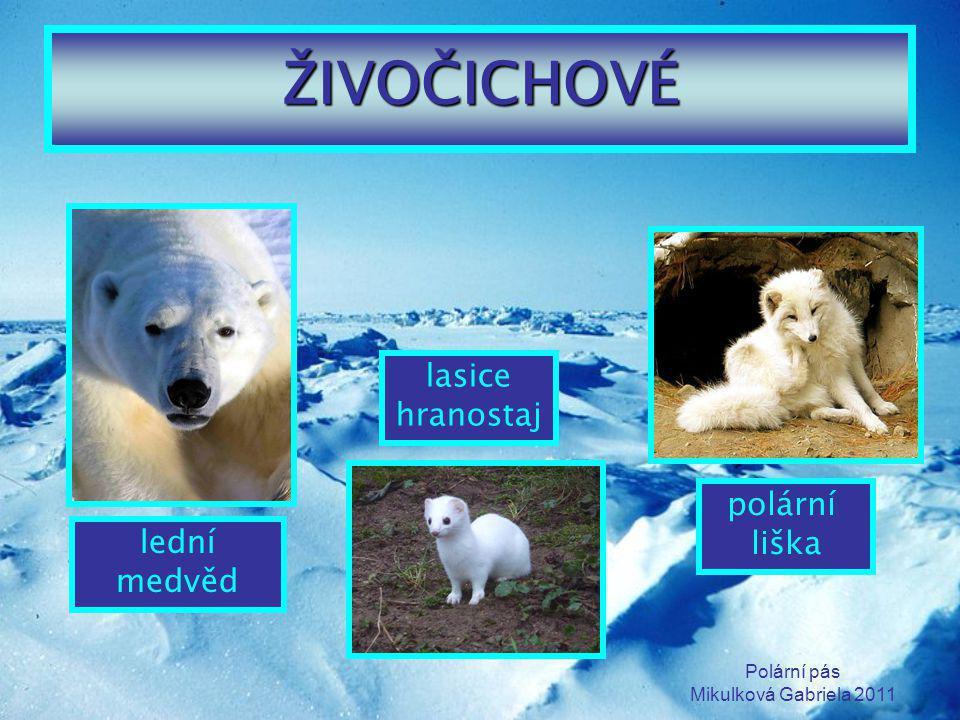 Polární pás Mikulková Gabriela 2011 ŽIVOČICHOVÉ lední medvěd polární liška lasice hranostaj