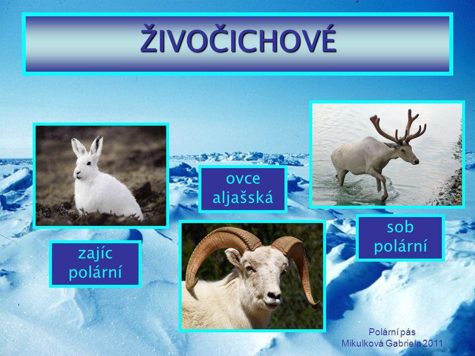 Polární pás Mikulková Gabriela 2011 ŽIVOČICHOVÉ zajíc polární ovce aljašská sob polární