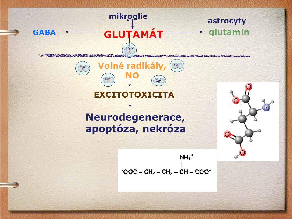mikroglie GLUTAMÁT glutamin GABA Ca 2+ Volné radikály, NO EXCITOTOXICITA Neurodegenerace, apoptóza, nekróza astrocyty Ca 2+