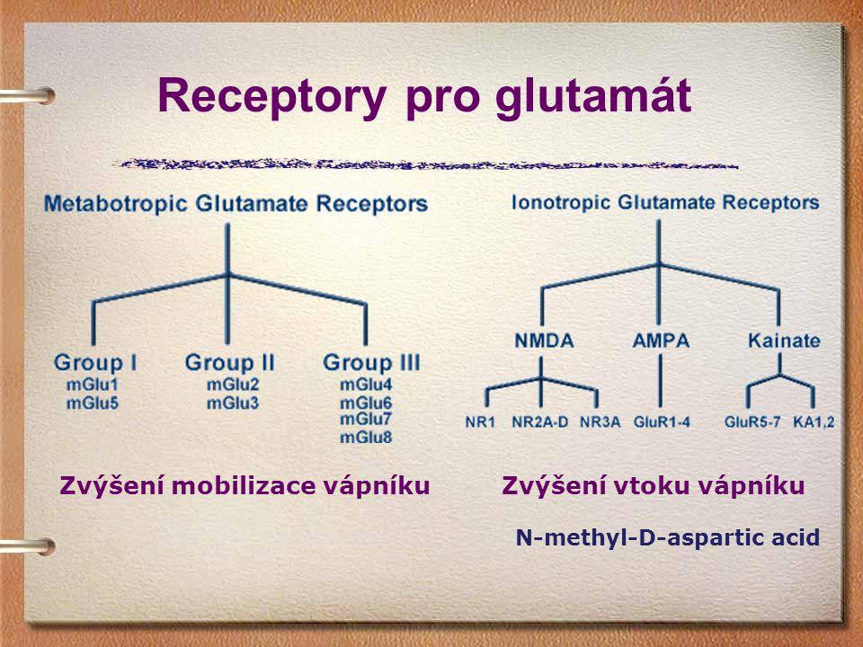 Receptory pro glutamát Zvýšení vtoku vápníku N-methyl-D-aspartic acid Zvýšení mobilizace vápníku