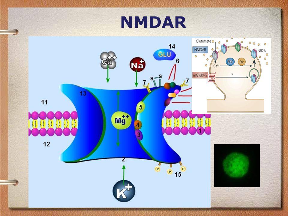 NMDAR