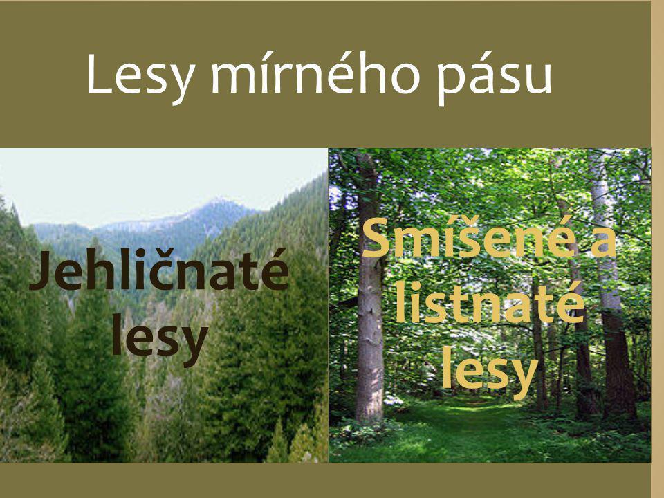 Lesy mírného pásu Jehličnaté lesy Smíšené a listnaté lesy