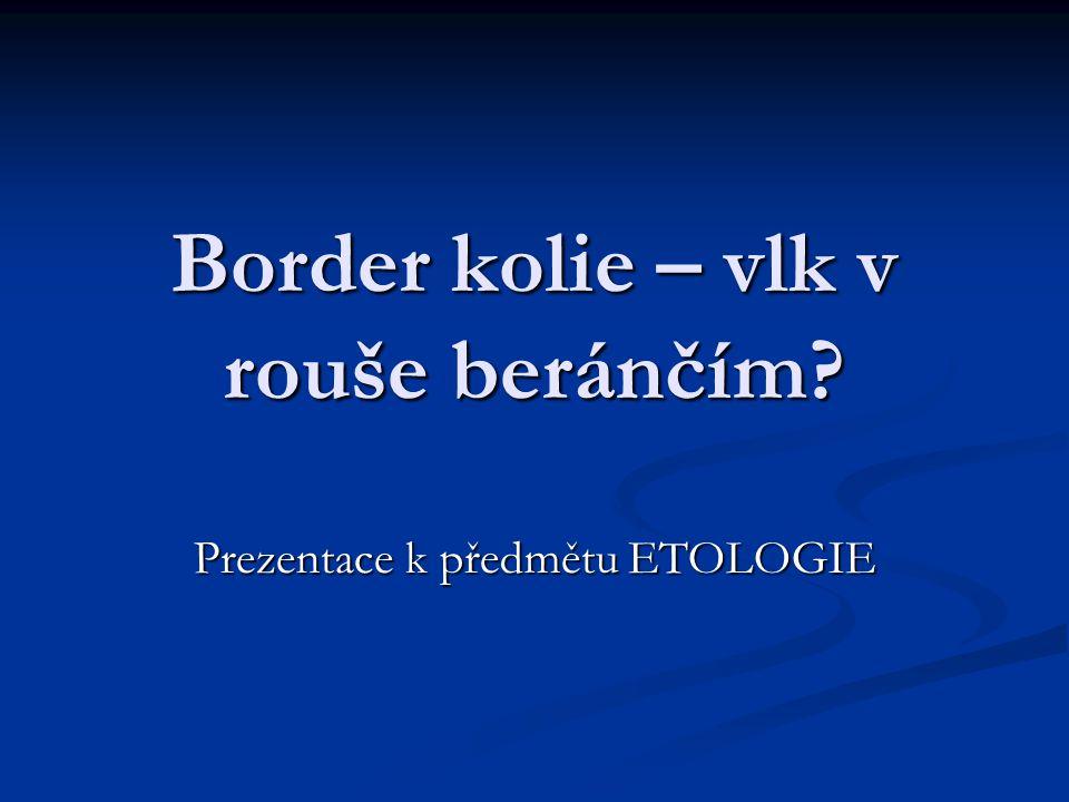 Border kolie – vlk v rouše beránčím Prezentace k předmětu ETOLOGIE