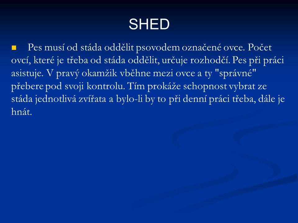 SHED Pes musí od stáda oddělit psovodem označené ovce. Počet ovcí, které je třeba od stáda oddělit, určuje rozhodčí. Pes při práci asistuje. V pravý o