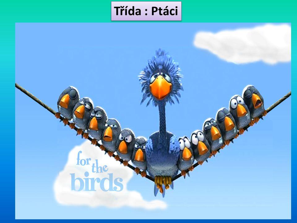 Etologie ptáků Etologie = nauka o chování živočichů.