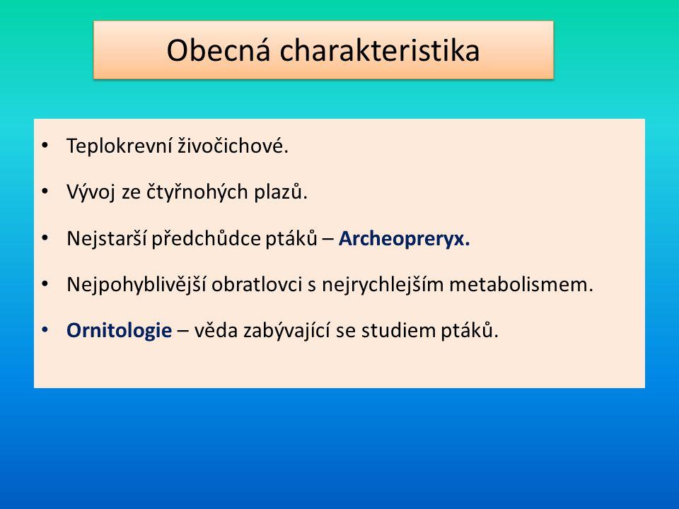Obecná charakteristika Teplokrevní živočichové. Vývoj ze čtyřnohých plazů. Nejstarší předchůdce ptáků – Archeopreryx. Nejpohyblivější obratlovci s nej