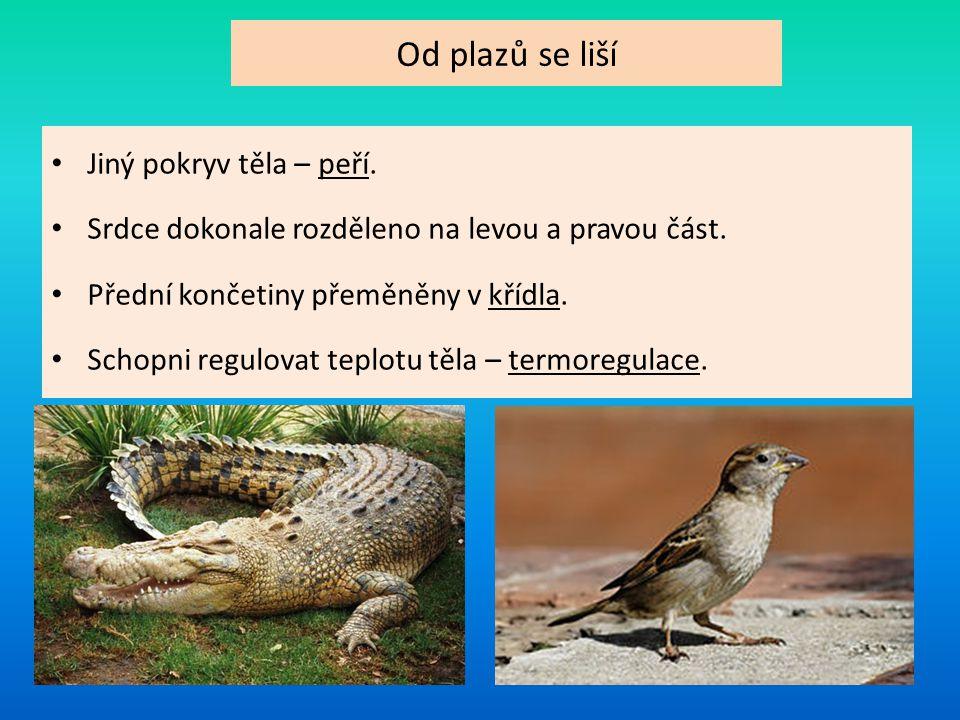 Dělení mláďat: 1.Mláďata krmivých ptáků -holá, slepá mláďata.