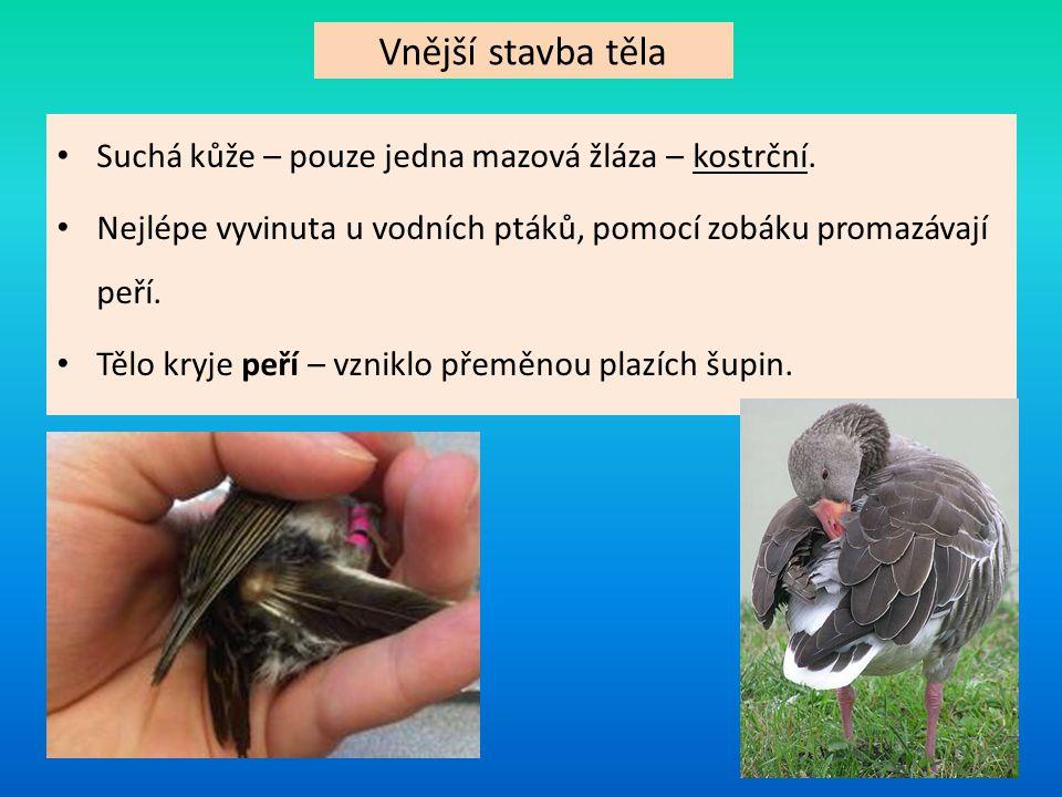 Typy ptačích per PrachovéObrysové Roste na místech zvaných nažiny – má izolační funkci Roste na místech zvaných pernice – má různé funkce