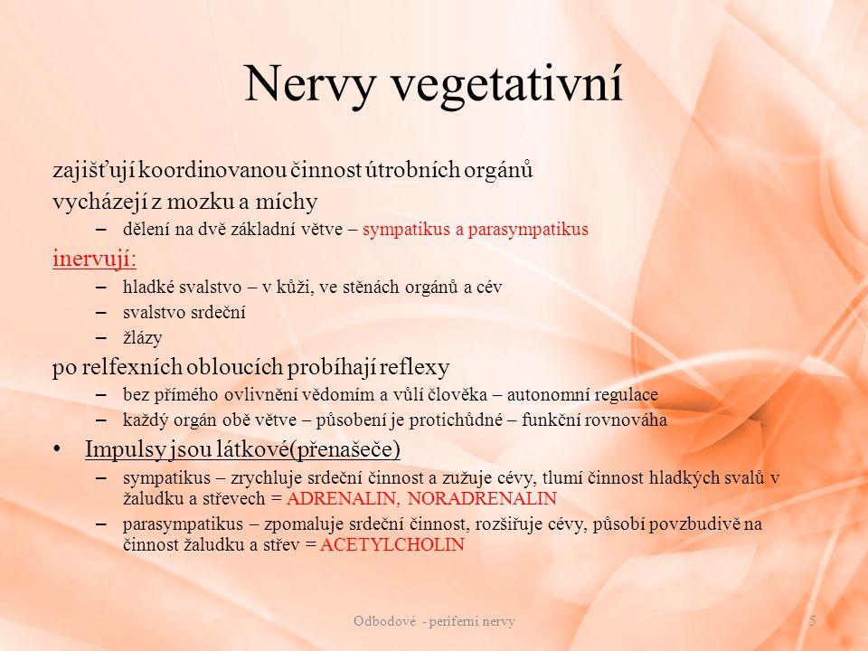 Nervy vegetativní zajišťují koordinovanou činnost útrobních orgánů vycházejí z mozku a míchy – dělení na dvě základní větve – sympatikus a parasympati