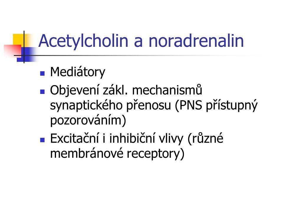 Acetylcholin Nervosvalová ploténka Pregangliová vlákna sympatiku i parasympatiku Postgangliová vlákna parasympatiku Cholinergní vlákna sympatiku (slinné, slzné a potní žlázy) Nikotinové a muskarinové receptory