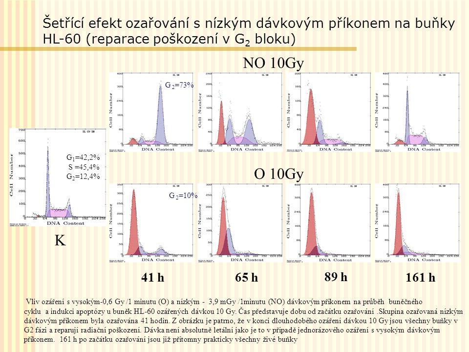 Vliv ozáření s vysokým-0,6 Gy /1 minutu (O) a nízkým - 3,9 mGy /1minutu (NO) dávkovým příkonem na průběh buněčného cyklu a indukci apoptózy u buněk HL