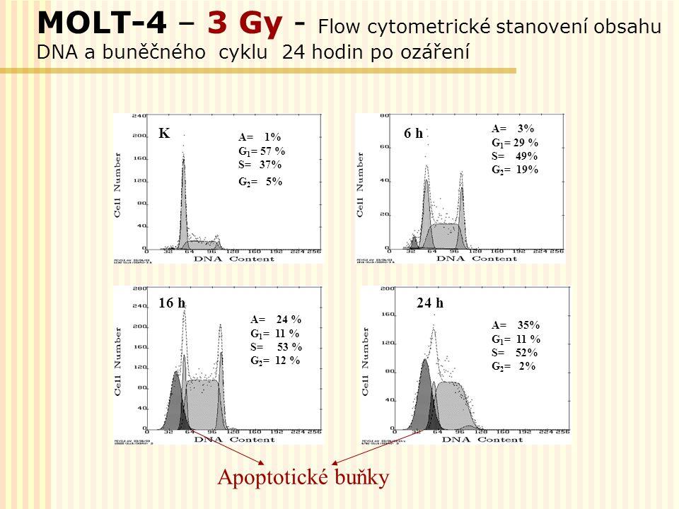 MOLT-4 – 3 Gy - Flow cytometrické stanovení obsahu DNA a buněčného cyklu 24 hodin po ozáření 6 hK A= 1% G 1 = 57 % S= 37% G 2 = 5% A= 3% G 1 = 29 % S=