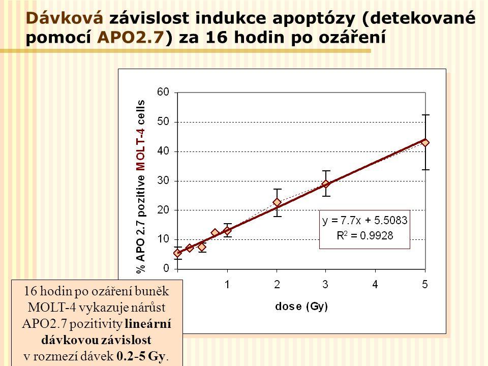 16 hodin po ozáření buněk MOLT-4 vykazuje nárůst APO2.7 pozitivity lineární dávkovou závislost v rozmezí dávek 0.2-5 Gy. Dávková závislost indukce apo