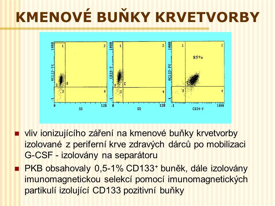 KMENOVÉ BUŇKY KRVETVORBY vliv ionizujícího záření na kmenové buňky krvetvorby izolované z periferní krve zdravých dárců po mobilizaci G-CSF - izolován