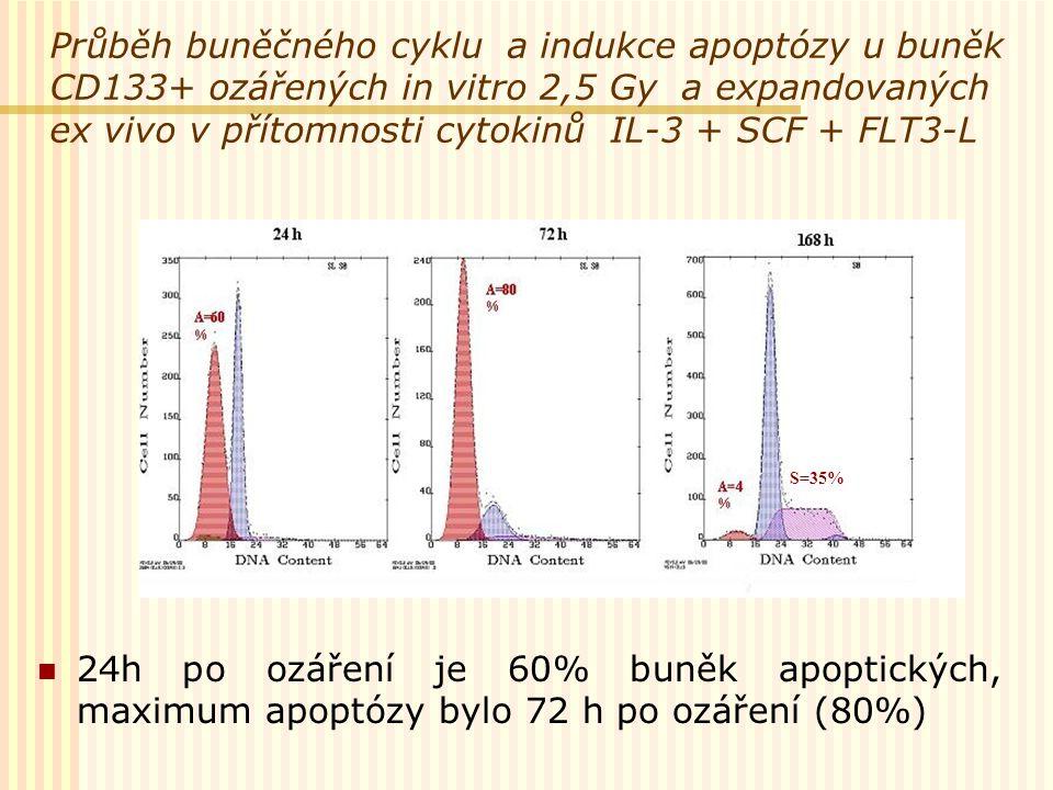 Průběh buněčného cyklu a indukce apoptózy u buněk CD133+ ozářených in vitro 2,5 Gy a expandovaných ex vivo v přítomnosti cytokinů IL-3 + SCF + FLT3-L