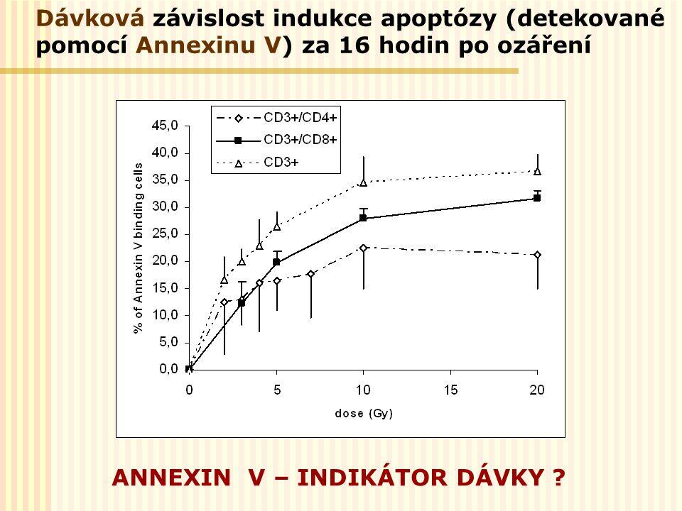 Dávková závislost indukce apoptózy (detekované pomocí Annexinu V) za 16 hodin po ozáření ANNEXIN V – INDIKÁTOR DÁVKY ?