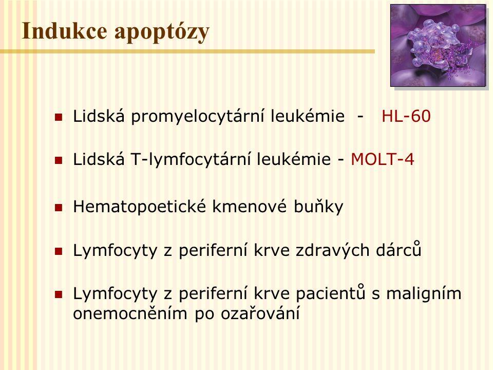 LIDSKÁ PROMYELOCYTÁRNÍ LEUKÉMIE HL-60 Rychlá interfázová smrt časná apoptóza Dávky nad 10 Gy Buňky umírají z fáze cyklu kde byly ozářeny Mitotická smrt oddálená apoptóza Zástava buněčného cyklu v S fázi a G 2 fázi Reparace poškození Ozařování v G 2 fázi zvyšuje radiorezistenci buněk Zkrácení bloku v G 2 fázi - radiosenzibilizující efekt D 0 = 2, 2 Gy