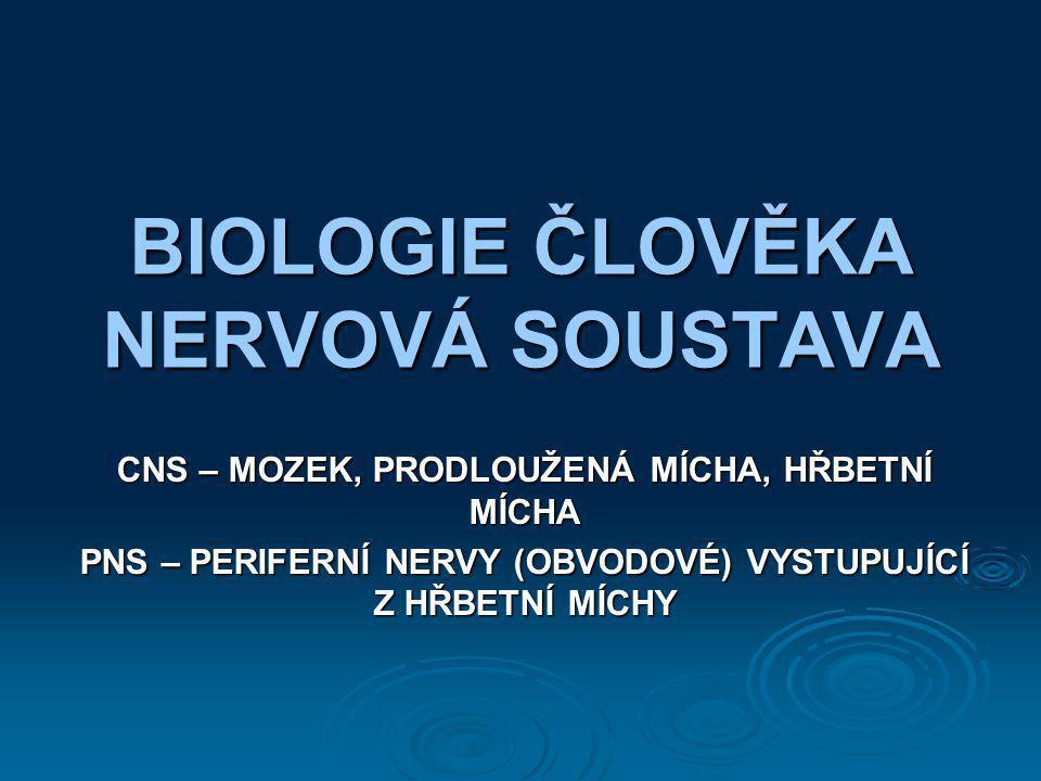 BIOLOGIE ČLOVĚKA NERVOVÁ SOUSTAVA CNS – MOZEK, PRODLOUŽENÁ MÍCHA, HŘBETNÍ MÍCHA PNS – PERIFERNÍ NERVY (OBVODOVÉ) VYSTUPUJÍCÍ Z HŘBETNÍ MÍCHY