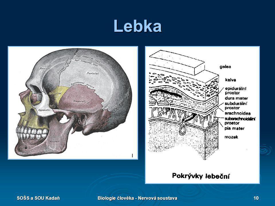 SOŠS a SOU KadaňBiologie člověka - Nervová soustava10 Lebka