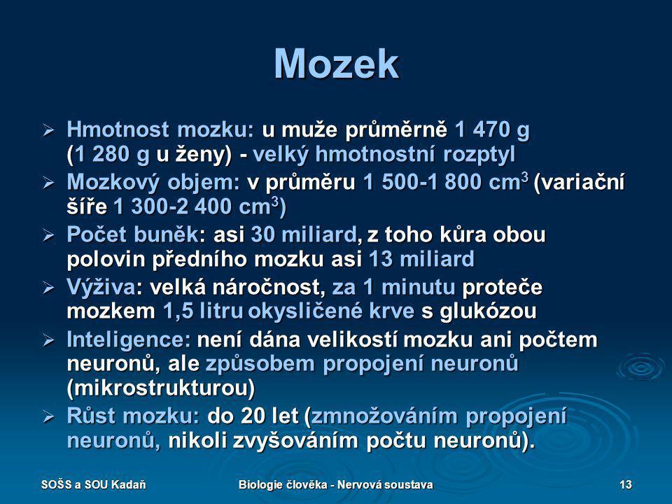 SOŠS a SOU KadaňBiologie člověka - Nervová soustava13  Hmotnost mozku: u muže průměrně 1 470 g (1 280 g u ženy) - velký hmotnostní rozptyl  Hmotnost