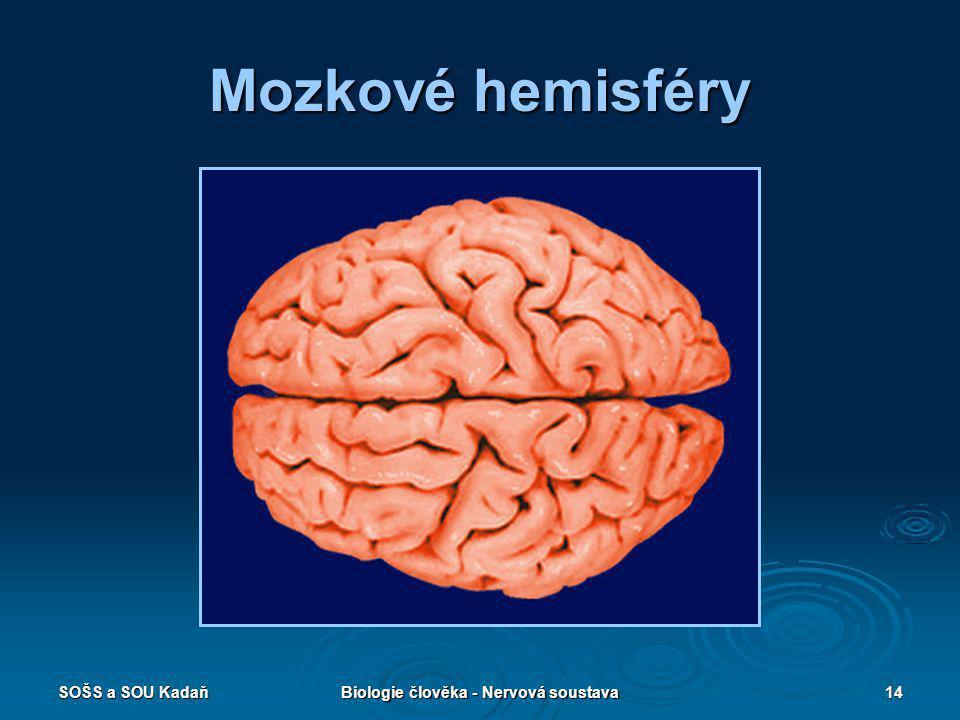 SOŠS a SOU KadaňBiologie člověka - Nervová soustava14 Mozkové hemisféry