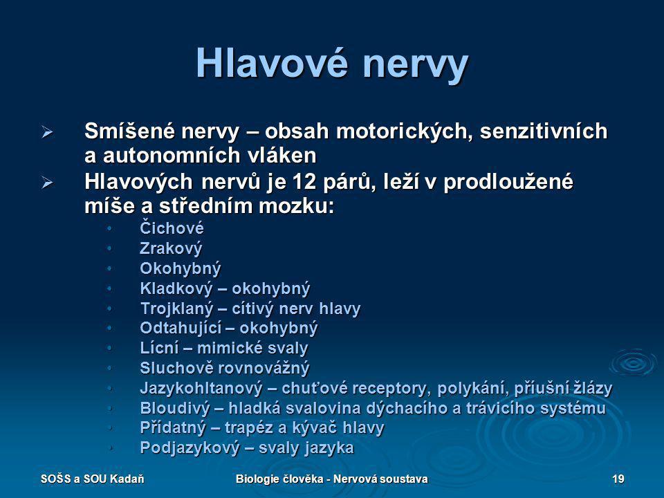 SOŠS a SOU KadaňBiologie člověka - Nervová soustava19 Hlavové nervy  Smíšené nervy – obsah motorických, senzitivních a autonomních vláken  Hlavových