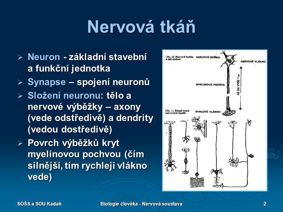 SOŠS a SOU KadaňBiologie člověka - Nervová soustava2 Nervová tkáň  Neuron - základní stavební a funkční jednotka  Synapse – spojení neuronů  Složen