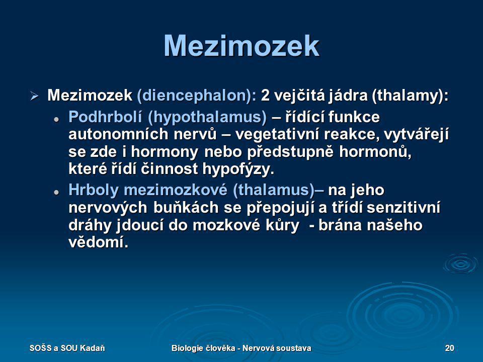 SOŠS a SOU KadaňBiologie člověka - Nervová soustava20 Mezimozek  Mezimozek (diencephalon): 2 vejčitá jádra (thalamy): Podhrbolí (hypothalamus) – řídí