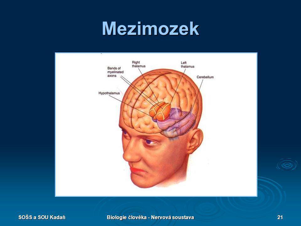 SOŠS a SOU KadaňBiologie člověka - Nervová soustava21 Mezimozek