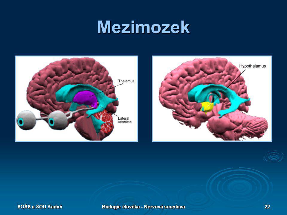 SOŠS a SOU KadaňBiologie člověka - Nervová soustava22 Mezimozek
