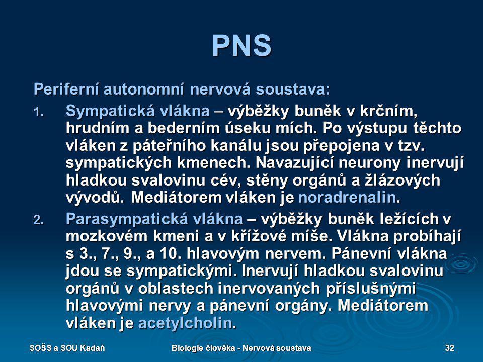 SOŠS a SOU KadaňBiologie člověka - Nervová soustava32 PNS Periferní autonomní nervová soustava: 1. Sympatická vlákna – výběžky buněk v krčním, hrudním